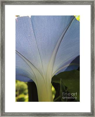 Under The Morning Glory Framed Print by Mariah Stone
