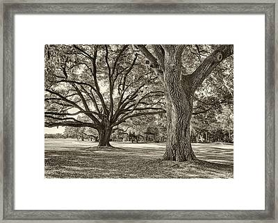 Under The Oaks Sepia Toned Framed Print by Phill Doherty