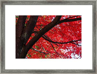 Under The Reds Framed Print by Rachel Cohen