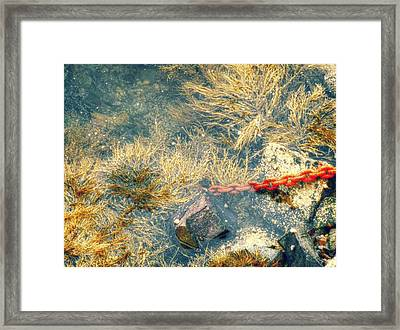 Framed Print featuring the photograph Under The Sea by Kelly Reber