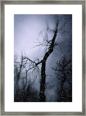 Under The Snow Framed Print by Diane Dugas