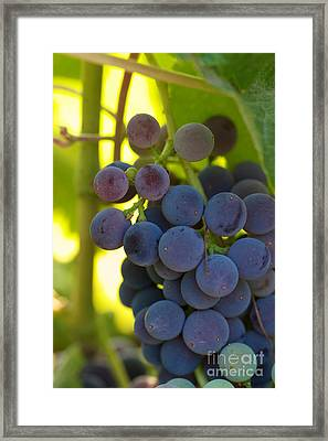 Under The Vine Framed Print by Brooke Roby