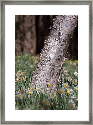 Under Tree Framed Print by Ron Smith