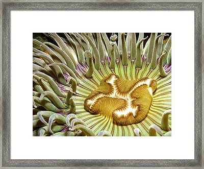 Under Water Anemone Framed Print by Lucidio Studio, Inc.