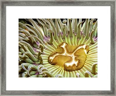 Under Water Anemone Framed Print