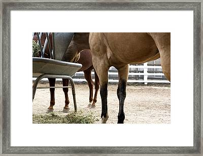 Framed Print featuring the photograph Underfoot by Lorraine Devon Wilke