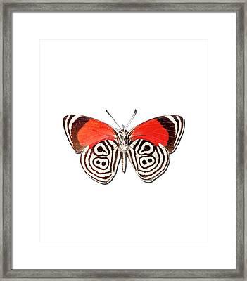 Underside Of The Meadow Wanderers Butterfly Framed Print by MajchrzakMorel