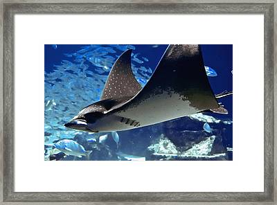 Underwater Flight Framed Print by DigiArt Diaries by Vicky B Fuller