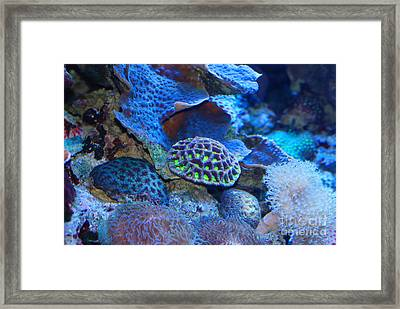 Underwater Paradise Framed Print by Andrea Simon