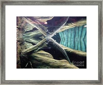 Framed Print featuring the photograph Underwater Reflection Of An Alligator Surfacing by Jim Fitzpatrick