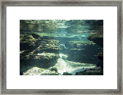Underwater Stream In Central Florida Framed Print by Christopher Purcell