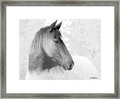 Unfinished Horse Framed Print by Bill Stephens