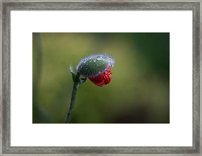 Unfolding Framed Print