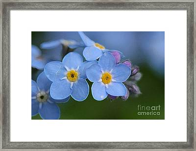 Unforgettable 4 Framed Print