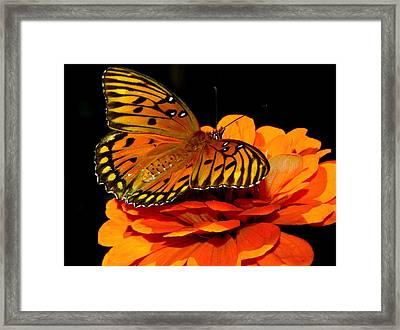 Unforgettable..... Framed Print
