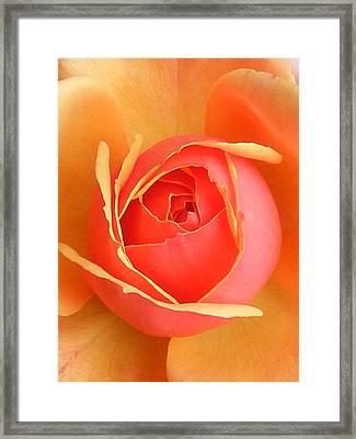 Unfurl Framed Print