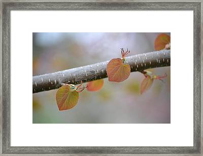 Framed Print featuring the photograph Unfurling Buds In The Heart Of Spring by JD Grimes