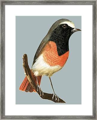 Unidentified Bird Framed Print by English School