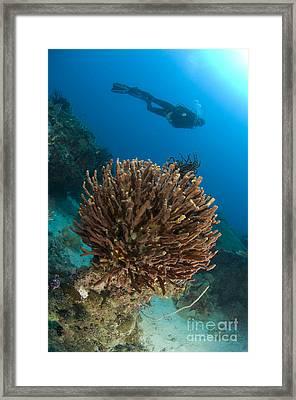 Unidentified Species Of Sponge Framed Print by Steve Jones