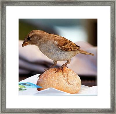 Framed Print featuring the photograph Uninvited Dinner Guest by Charles Lupica