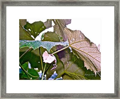 Unity Framed Print by Rotaunja