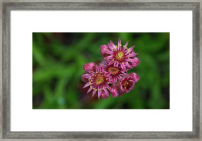 Unknown Flowers Framed Print