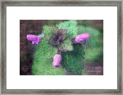 Unkraut Framed Print by Angela Bruno