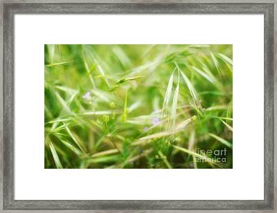 Unnoticed Beauty Framed Print by Hideaki Sakurai