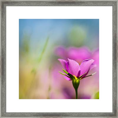 Untitled Colors Framed Print by Joel Olives