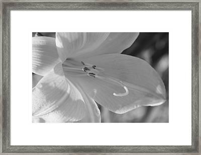 Untitled Flower Framed Print