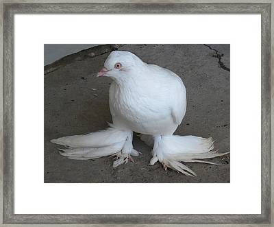 Unusual Fellow Framed Print