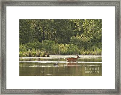 Framed Print featuring the photograph Unusual Pair  by Jeannette Hunt