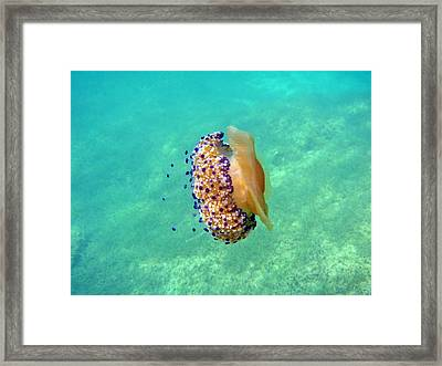 Unwelcome Jellyfish Framed Print by Rod Johnson