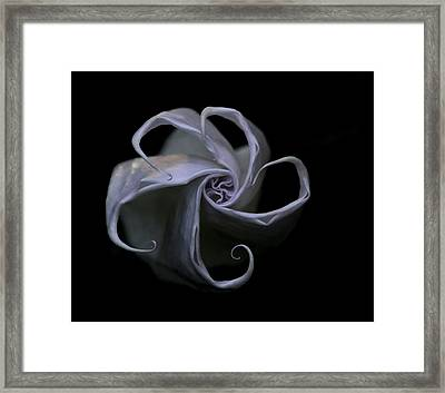 Unwinding Bud Framed Print by Angie Vogel