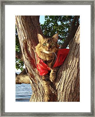 Up A Tree Framed Print by Joann Biondi