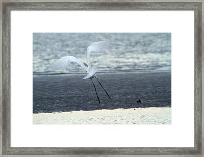 Up And Away Framed Print by Karol Livote