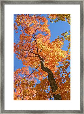Up And Up Framed Print by Sharon I Williams