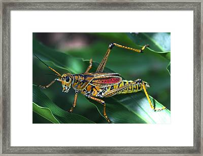 Up Close And Personal Framed Print by Ian G Hargraves