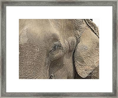 Up Close And Personal  Framed Print by Louise Peardon
