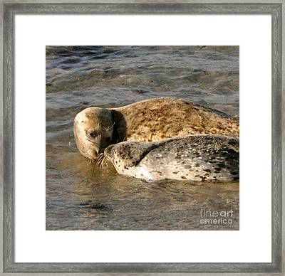 Up Close Framed Print by Johanne Peale