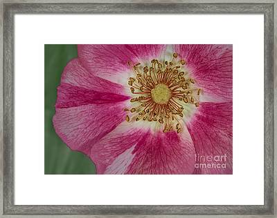Up Close  Framed Print by Susan Candelario