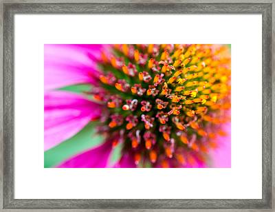 Up Close With A Cone Flower Framed Print by Susan Stone