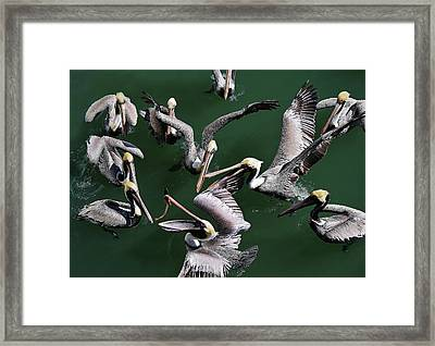 Up In The Air Framed Print by Paulette Thomas