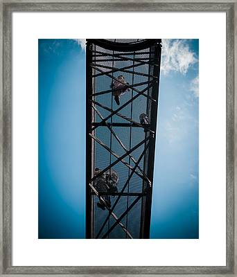 Up In The Skies Framed Print by Lenny Carter