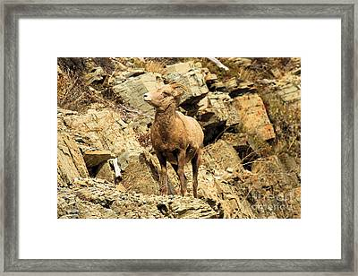 Up Where? Framed Print by Adam Jewell