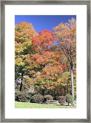 Upj Campus Autumn  Framed Print