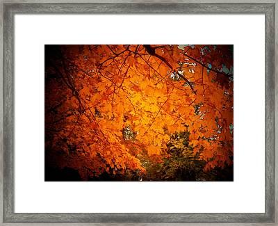 Upperville Leaves Framed Print