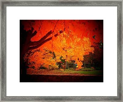 Upperville Trees Framed Print
