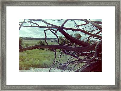 Framed Print featuring the photograph Uprooted by Bonfire Photography
