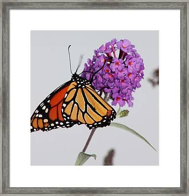 Upside Down Framed Print by Becca Brann